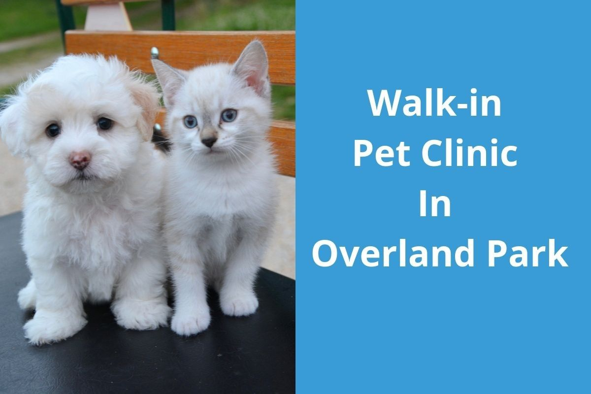 Walk-in-Pet-Clinic-In-Overland-Park-2
