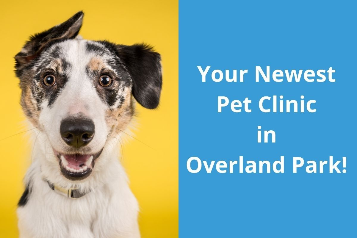 Your-Newest-Pet-Clinic-in-Overland-Park