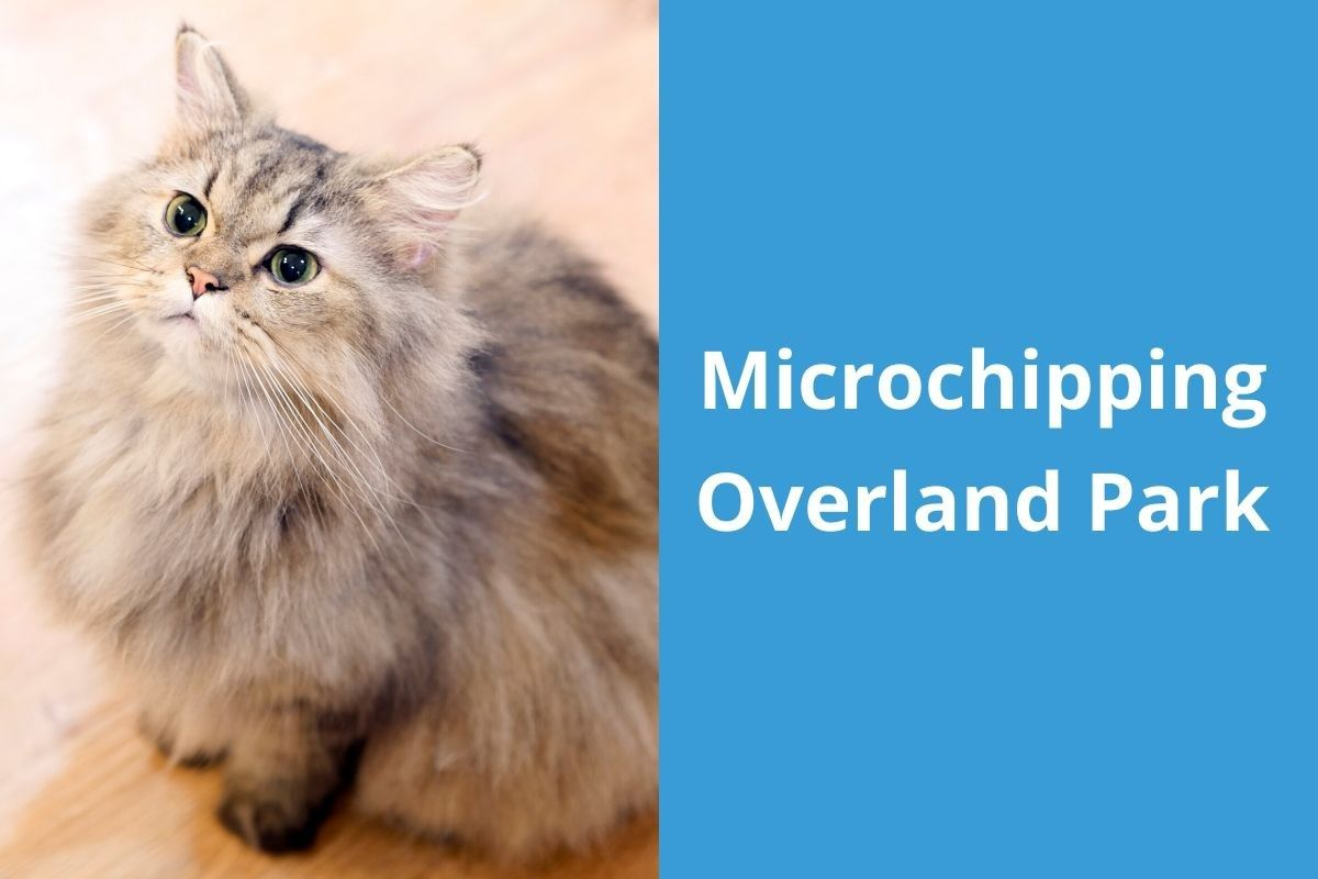 Microchipping-Overland-Park